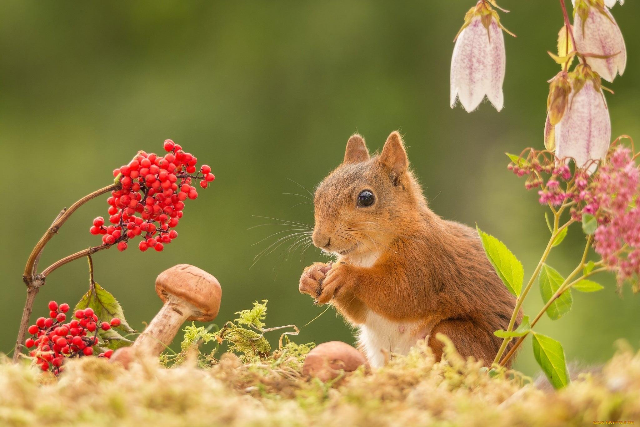 осень в жизни животных картинки что ожидать